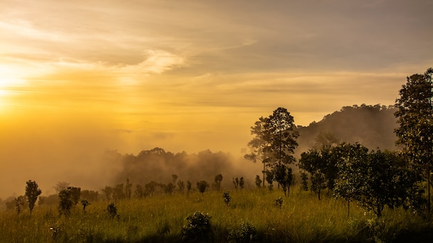 Paisagem de prados e árvores no parque nacional thung salaeng luang, província de phetchabun, tailândia