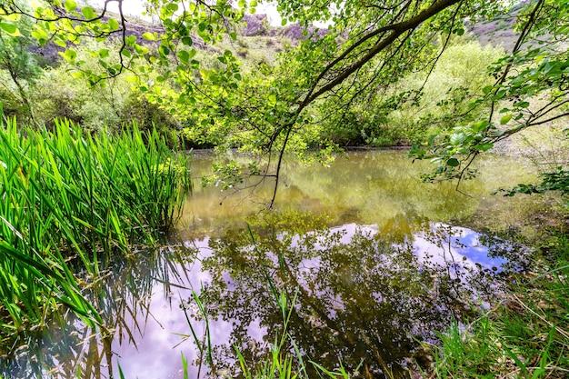 Paisagem de primavera na floresta com pequeno rio refletindo os galhos das árvores. duratãƒâ³n, segovia.