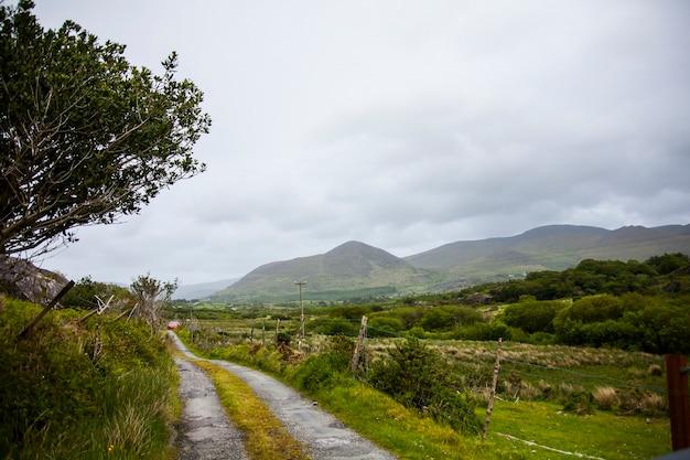 Paisagem de primavera nas florestas da irlanda.