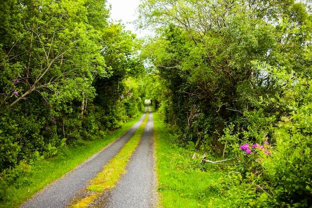 Paisagem de primavera nas terras da irlanda.