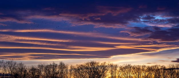 Paisagem de silhuetas de árvore sob um céu nublado durante um belo pôr do sol rosa