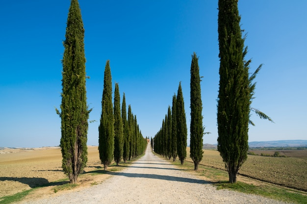 Paisagem de toscânia da estrada das árvores de cipreste na itália.