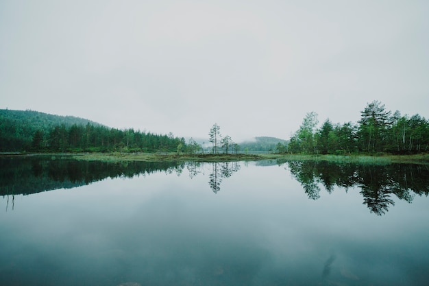 Paisagem, de, um, lago, cercado, por, árvores
