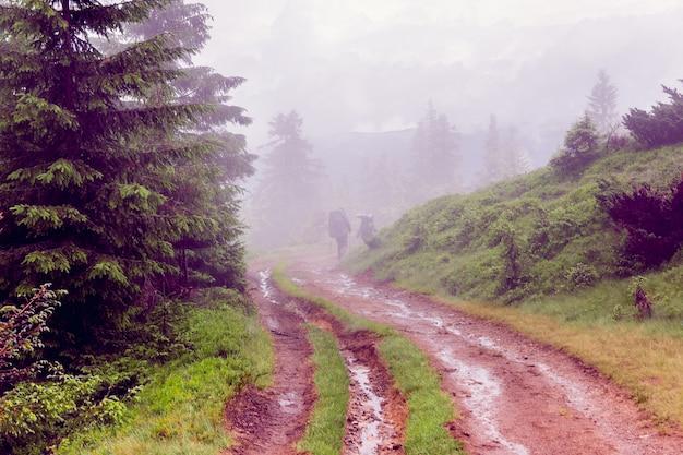 Paisagem, de, um, nebuloso, cárpatos, montanhas, com, turista