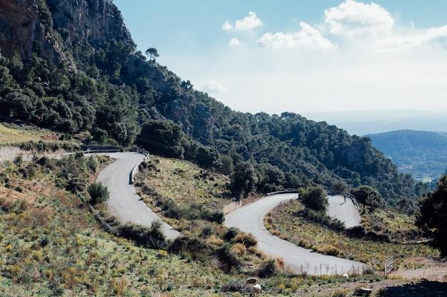 Paisagem de uma estrada curva e árvores verdes