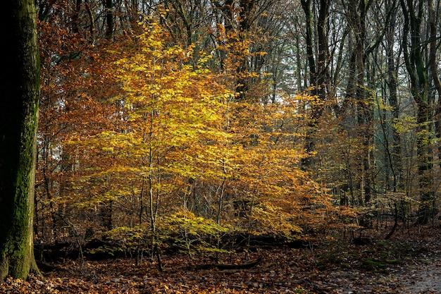 Paisagem de uma floresta cercada por árvores cobertas por folhas coloridas sob a luz do sol no outono