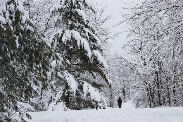 Paisagem de uma floresta cercada por árvores e grama coberta de neve e nevoeiro