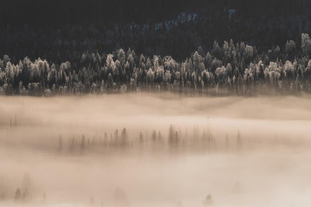Paisagem de uma floresta coberta de neve e neblina sob a luz do sol no inverno