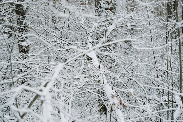 Paisagem de uma floresta coberta de neve em uma nevasca