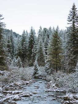 Paisagem de uma floresta com muitos abetos cobertos de neve nas montanhas tatra, na polônia