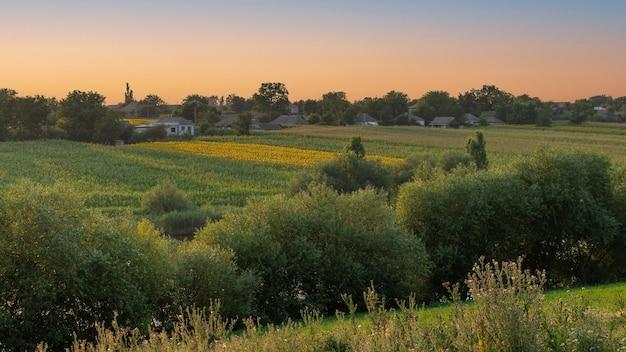 Paisagem de verão com árvores verdes nas encostas da ravina milharal e campos de girassóis no horizonte
