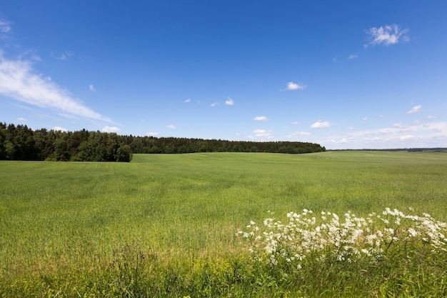 Paisagem de verão com céu azul e grama verde, meados do verão no campo agrícola