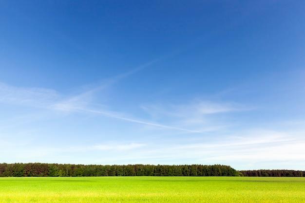 Paisagem de verão com céu azul, grama verde e floresta de coníferas na linha do horizonte