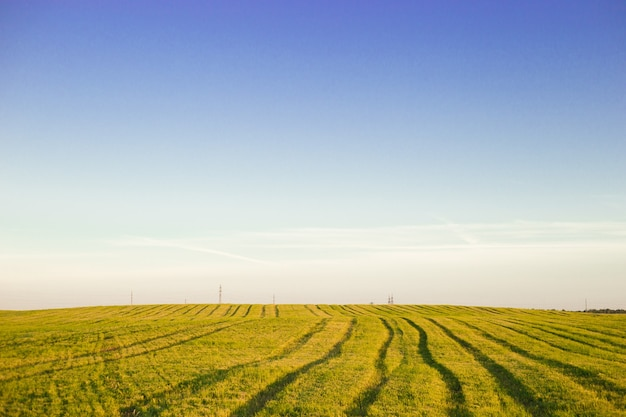 Paisagem de verão com céu azul nublado, campo de trigo e pista dentro