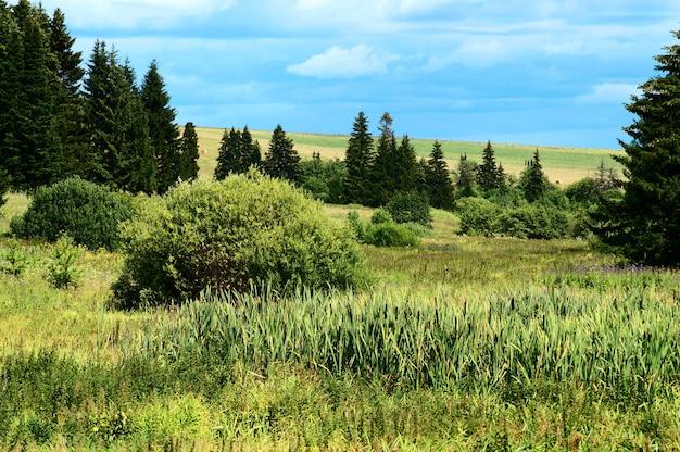 Paisagem de verão com grama verde.