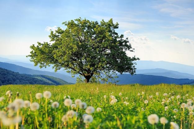 Paisagem de verão com uma grande árvore no fundo da montanha