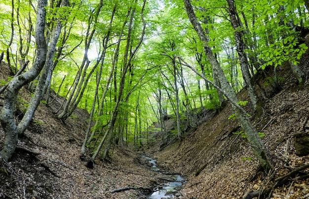 Paisagem de verão em floresta com rio pequeno