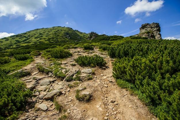 Paisagem de verão nas montanhas