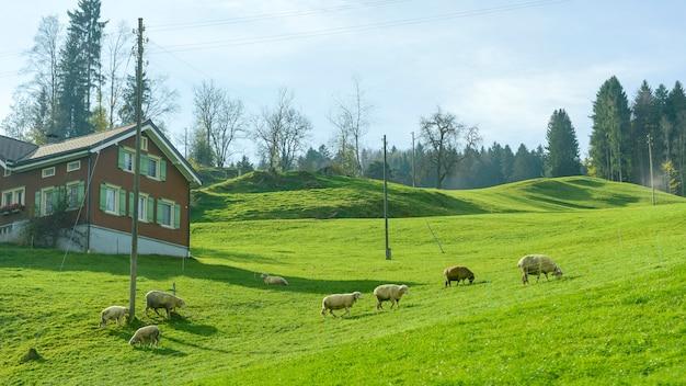 Paisagem de vila rural verde no outono na suíça