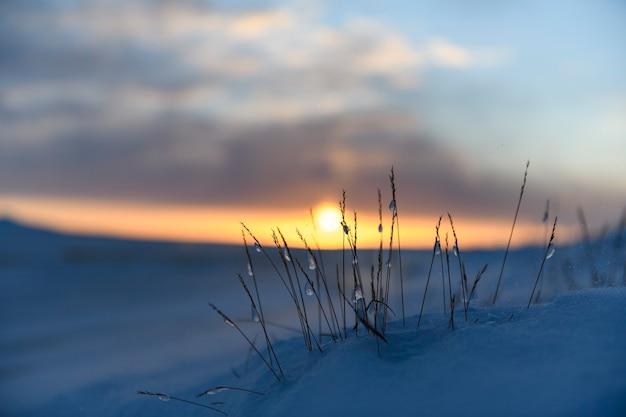 Paisagem do ártico no inverno. grama com gelo e neve na tundra. pôr do sol.