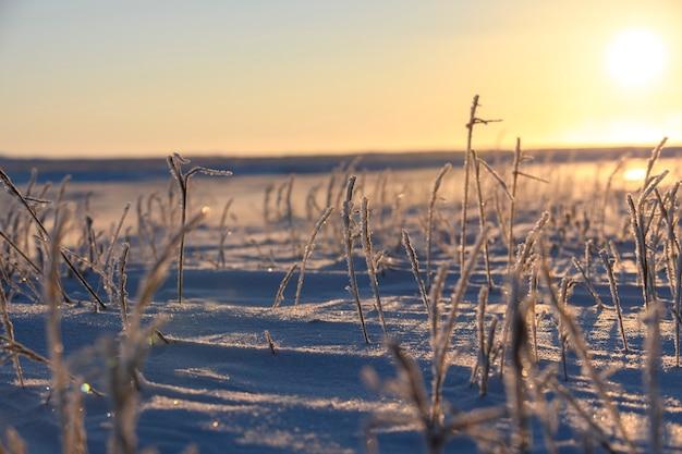 Paisagem do ártico no inverno. grama com gelo na tundra. lindo pôr do sol.
