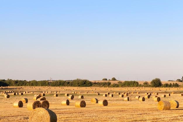 Paisagem do campo agrícola com pilhas de palha, clima ensolarado de verão