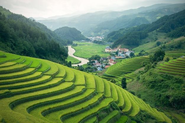 Paisagem do campo de arroz em terraços asiáticos