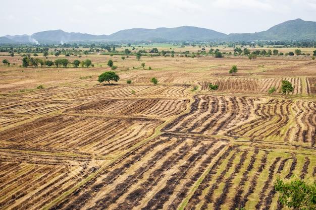Paisagem do campo de arroz no sudeste da ásia após a estação da colheita.