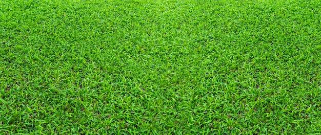 Paisagem do campo de grama no parque público verde usar como pano de fundo natural ou pano de fundo