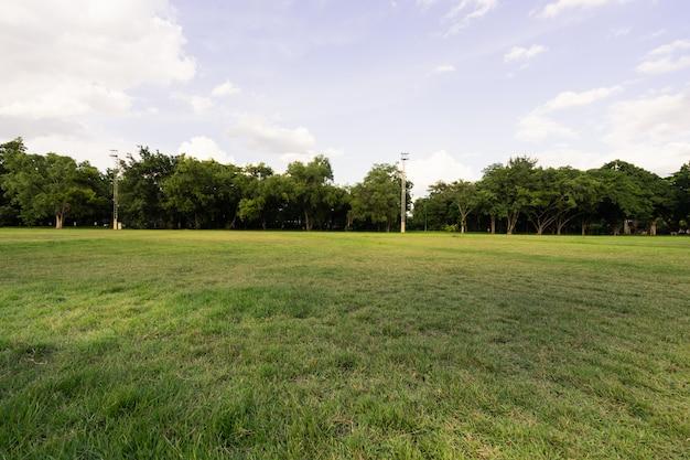 Paisagem do campo de grama