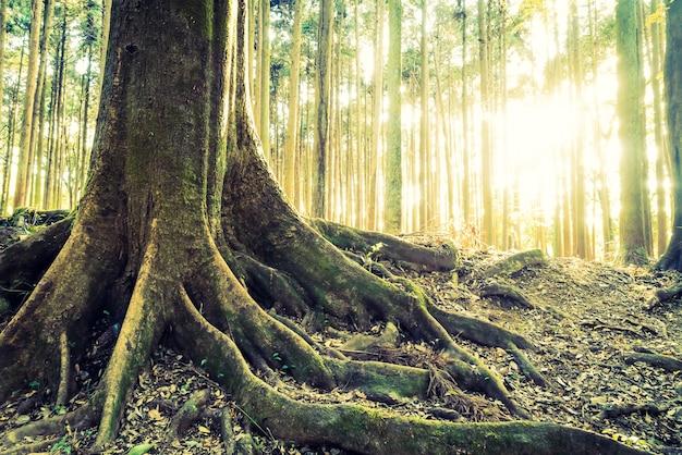 Paisagem do cenário do vintage beleza verde