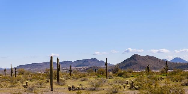 Paisagem do deserto, cactos e montanhas no arizona