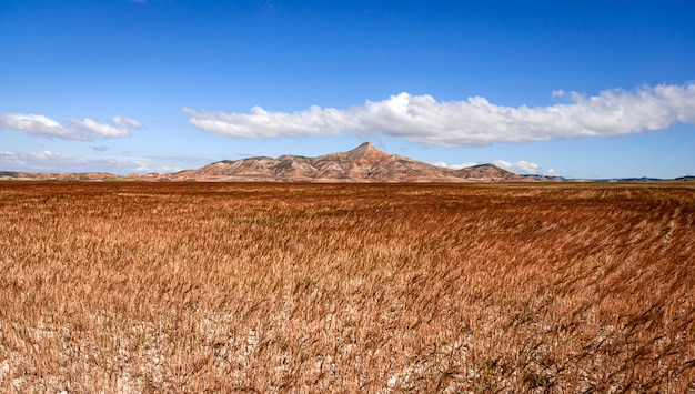 Paisagem do deserto de bardenas, tudela, navarra, espanha Foto Premium