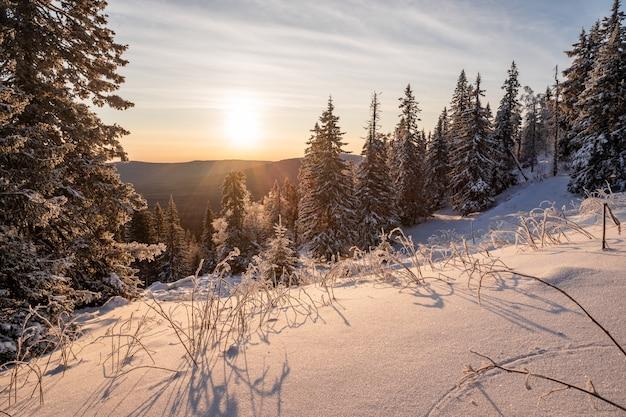 Paisagem do inverno - árvores geladas no bosque nevado na manhã ensolarada. natureza tranquila de inverno na luz solar