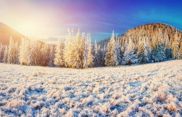 Paisagem do inverno brilhando pela luz solar. cena invernal dramática