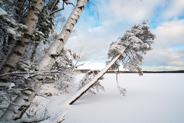 Paisagem do inverno com árvores cobertas de neve na margem de um lago congelado.