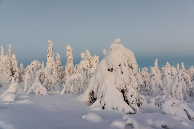 Paisagem do inverno com as árvores cobertos de neve na floresta do inverno.