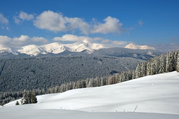 Paisagem do inverno com colinas de alta montanha cobertas por uma floresta de pinheiros perenes, após forte nevasca em um dia frio de inverno.