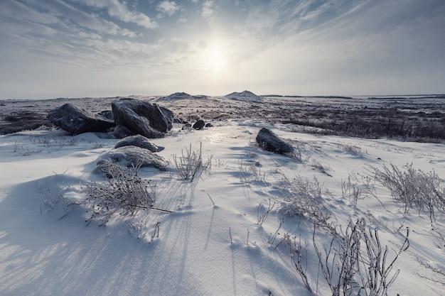Paisagem do inverno com neve coberta de estepe. grama gelada em pradaria de neve