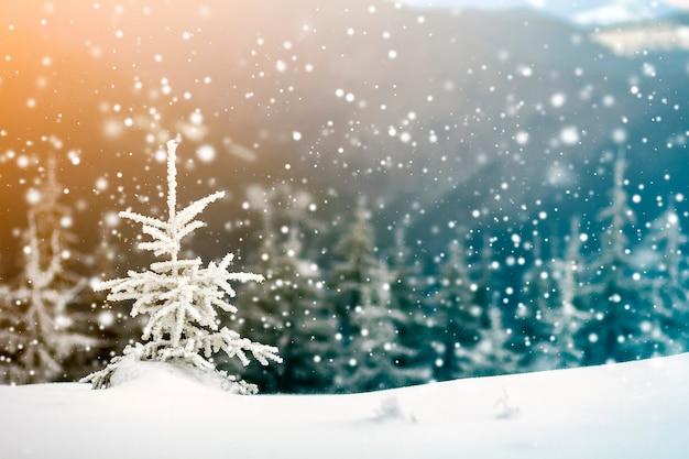 Paisagem do inverno com pinheiro pequeno coberto de neve