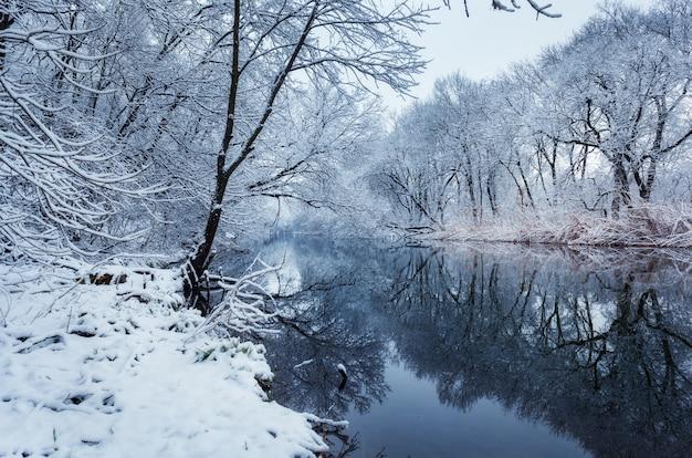 Paisagem do inverno com rio na floresta.