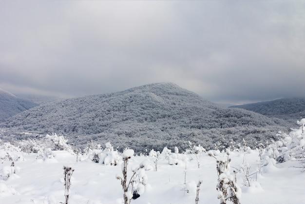 Paisagem do inverno com uma colina de floresta coberta de neve