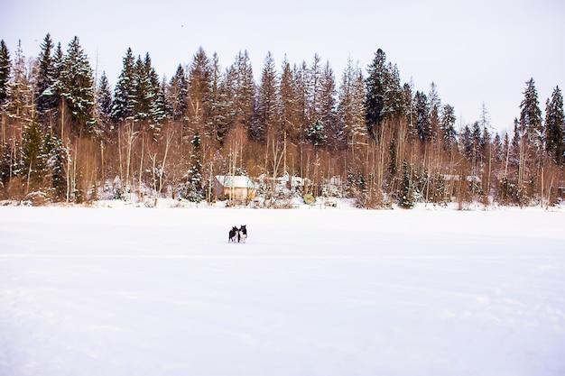 Paisagem do inverno com uma pequena casa na floresta