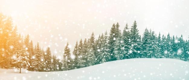 Paisagem do inverno de conto de fadas. pinheiros com neve e geada na encosta da montanha iluminada por raios de sol no céu azul e flocos de neve caindo copiam o fundo do espaço. cartão de feliz ano novo e feliz natal.