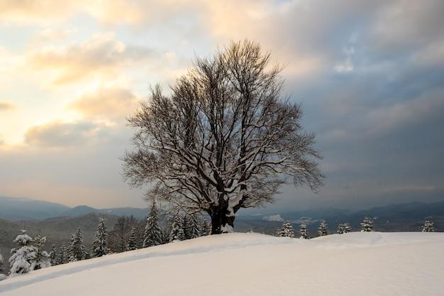 Paisagem do inverno temperamental com árvore nua escura coberta com campo de neve caída fresca nas montanhas de inverno na noite fria e sombria.