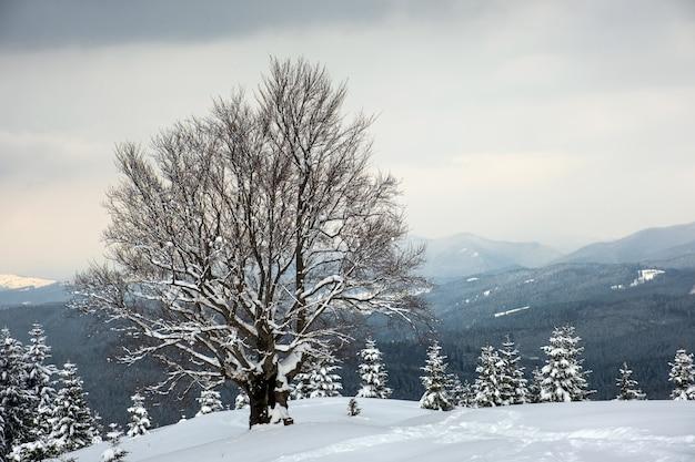Paisagem do inverno temperamental com árvore nua escura coberta com campo de neve fresca caída nas montanhas de inverno em dia frio e sombrio.