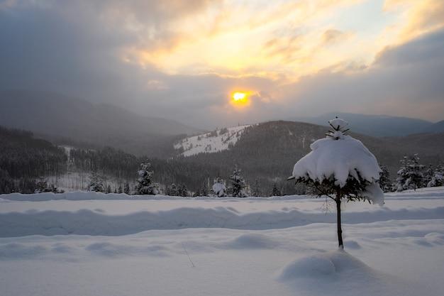 Paisagem do inverno temperamental com pequeno pinheiro coberto com campo de neve fresca caída nas montanhas de inverno, na noite fria e sombria.