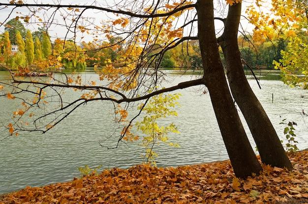 Paisagem do lago de outono, uman, oblast de cherkasy