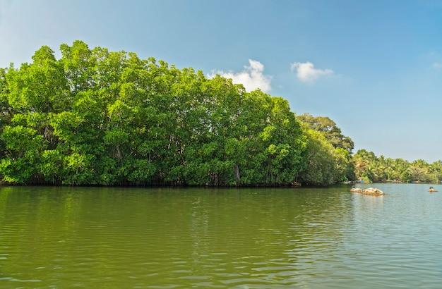 Paisagem do lago koggala, sri lanka Foto Premium