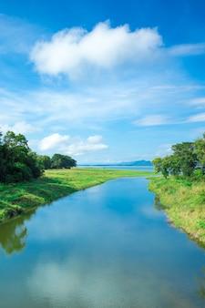 Paisagem do lago sri lanka, sri lanka, árvores na água, árvores no lago